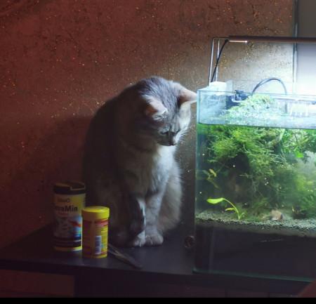 aquariophile AntheaAndKo