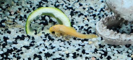 aquariophile Jojodu06
