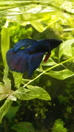 aquariophile Cicam83