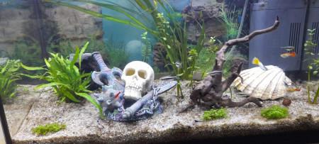 aquariophile harry-covert