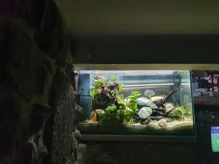 aquariophile Manlawi42