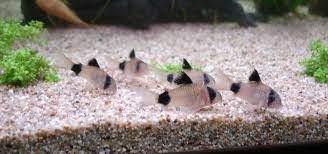 aquariophile Aquagarden83