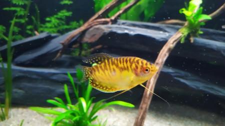 aquariophile Nk4077