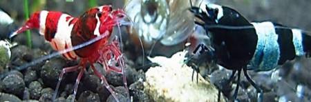 aquariophile Figudro31