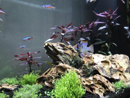 aquariophile Corentin77