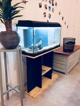 aquariophile Jobijoba