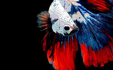aquariophile Likoname