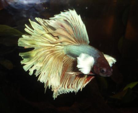 aquariophile mathino