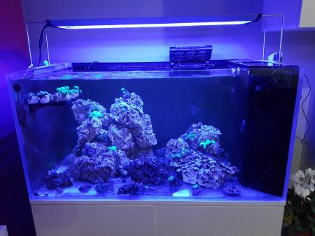aquariophile pierre51100