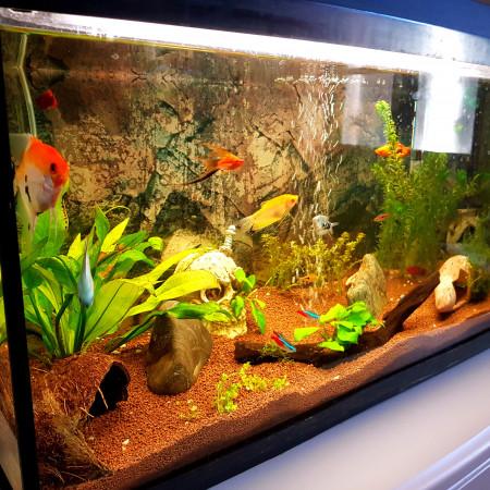 aquariophile Jujucasou151268