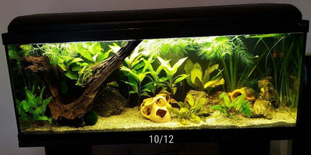aquariophile Cha26