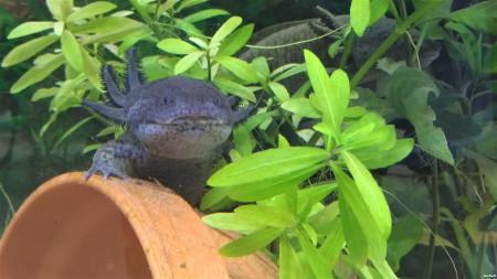 aquariophile Helene