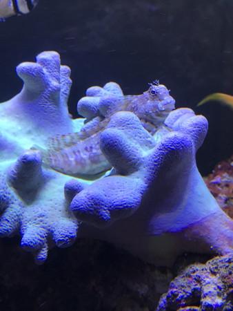 aquariophile Matpioupiou