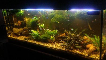 aquariophile Eau_douce88