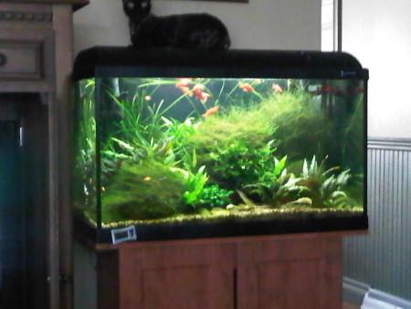 aquariophile Janet