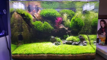 aquariophile Dav01