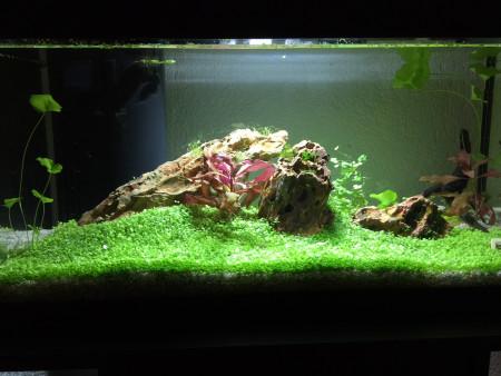 aquariophile mio_sotis