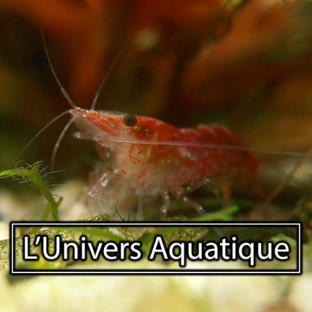 aquariophile Didier_Crick