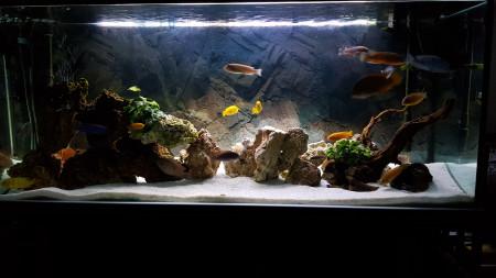 aquariophile Gillou80
