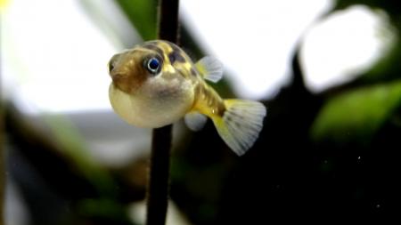 aquariophile Sparte