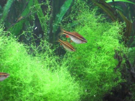 aquariophile Jany72