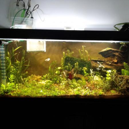 aquariophile Florence