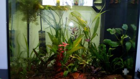aquariophile Fredhorse
