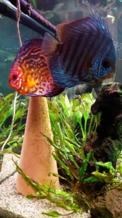 aquariophile Robdin