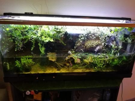 aquariophile Melie999