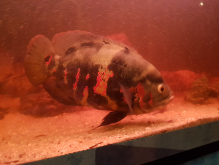 aquariophile Becas