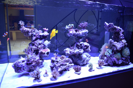 aquariophile Pepone34