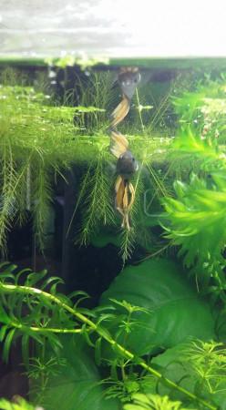 aquariophile Cathy47