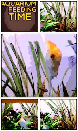 aquariophile PhilW