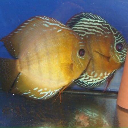 aquariophile odizio