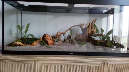 aquariophile DavidDav