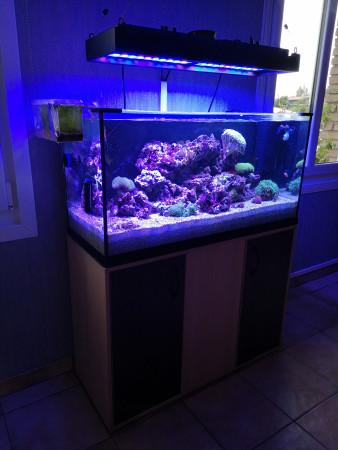aquariophile Pitiyeux