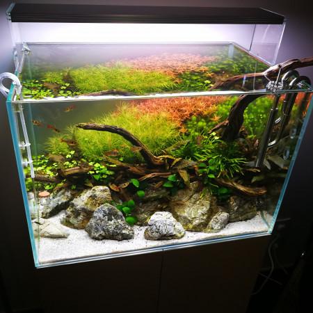 aquariophile Favarom1
