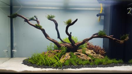 aquariophile christophe-pironnet