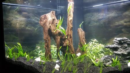 aquariophile antonis