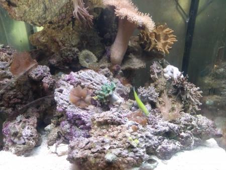 aquariophile fabrice-minichoune