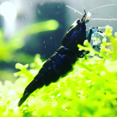aquariophile Mat63100
