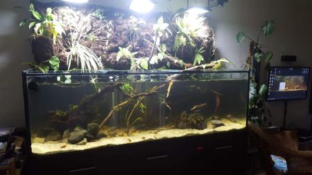 aquariophile cazflo974