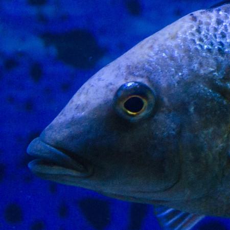 aquariophile eddy38
