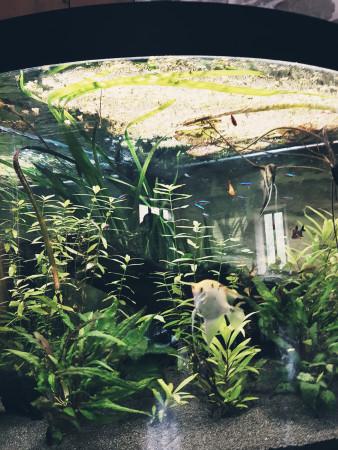 aquariophile emilie-monier