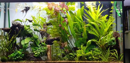 aquariophile Manuelesh