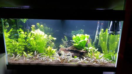 aquariophile Benoitdu26530