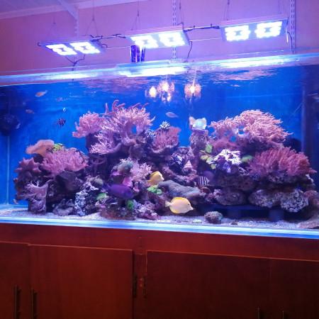 aquariophile bruno-saletti