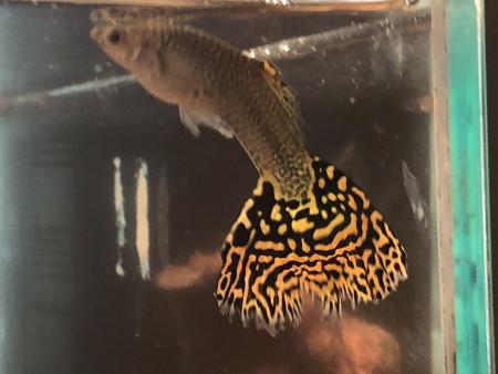 aquariophile Jeambe