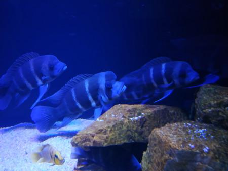 aquariophile Roro04