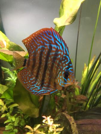 aquariophile aurel26